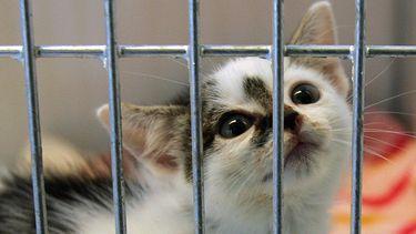 coronahuisdieren kitten asiel
