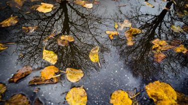 foto van herfstbladeren