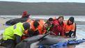 Op deze foto zijn zes mensen te zien die een aangespoelde walvis terug het water in proberen te helpen.