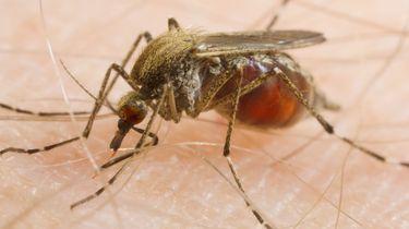 De mug is terug van nooit weggeweest: wordt 't een 'goed' muggenjaar?