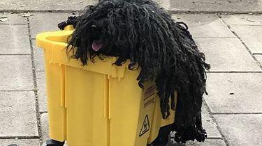 Halloween-outfit van een hond als dweil gaat viral