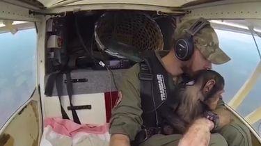 Chimpansee speelt met piloot tijdens reddingsvlucht