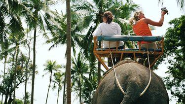 Achter 'kiekje' met olifant schuilt fors dierenleed