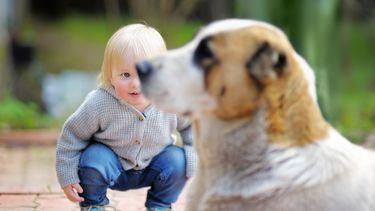 Peuter weet het zeker: De hond is zijn broer