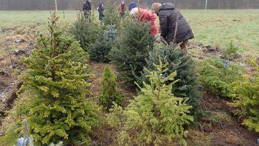Geef je boom 'n tweede leven in het Kerstbomenasiel