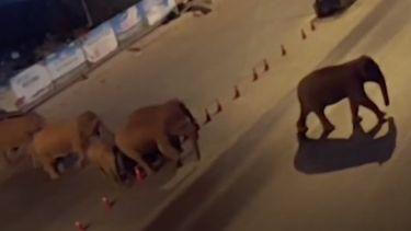 Ontsnapte kudde olifanten China