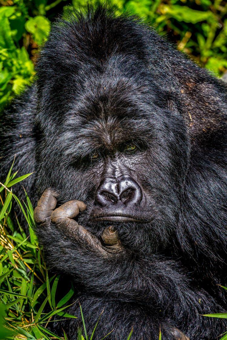 'Boredom' © Marcus Westberg/ Comedy Wildlife Photo Awards 2020
