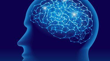 Een illustratie van de menselijke hersenen