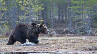 Een foto van een beer
