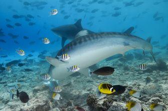 Een foto van een haai tussen andere vissen