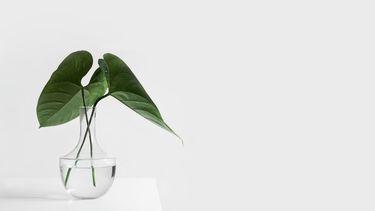 Op deze foto is een plant op een wit bureau te zien, voor een witte muur.