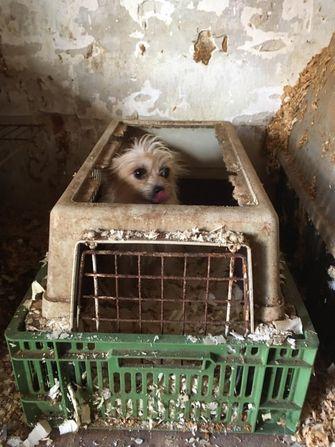 Een foto van een van de puppy's van handelaren