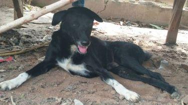 Heldhaftig hondje redt levend begraven baby