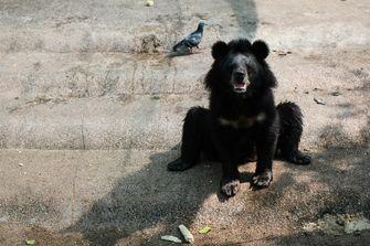 Een foto van een zwarte beer.