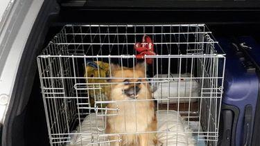 politie redt hond uit kofferbak