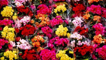 Een ziekenhuispatiënt stuurde 1400 bossen bloemen naar het ziekenhuispersoneel   Foto: ANP