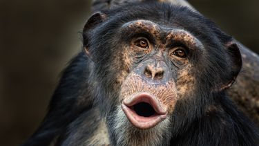 diere uitsterven bedreigd