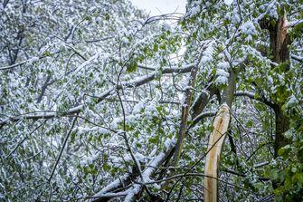 Een foto van bomen in Limburg met een laagje sneeuw