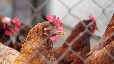 Kassa eieren kippen