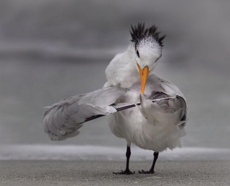 'Tern tuning it's wings'