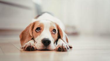 Hongerige huisdieren door storing met 'slimme' voerbak