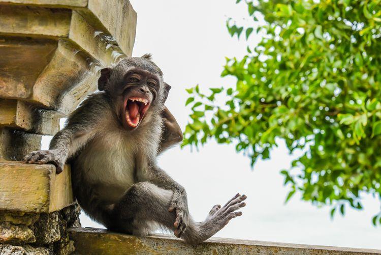 'Striking a Pose' © Luis Martí/ Comedy Wildlife Photo Awards 2020