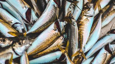 Viswinkel moet sluiten vanwege nepogen op vis
