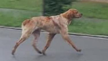 Hond loopt van Zwitserland naar Nederland