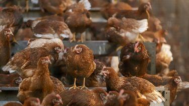 Europa betaalt miljoenen voor vleesreclames