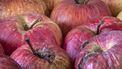 Een close up foto van appels, een aantal hebben zichtbare rot