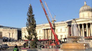 Britten ontevreden met trieste kerstboom