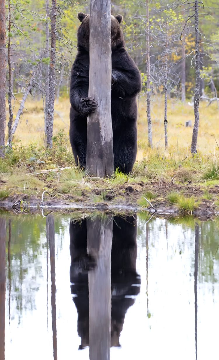 'Doggo' © Esa Ringbom / Comedy Wildlife Photo Awards 2020