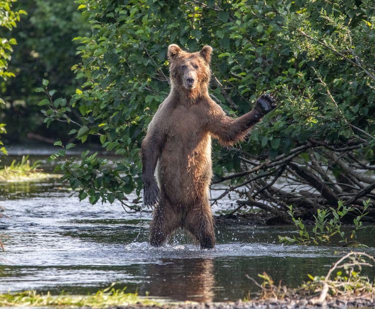'Hi Yall' ©Eric Fisher  / Comedy Wildlife Photo Awards 2020