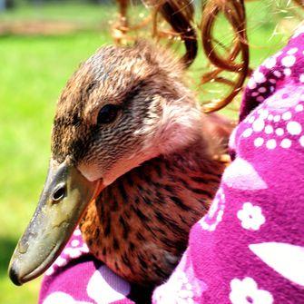 Ook eenden maken een knuffelhormoon bij je los. Foto: Viewminder/Flickr.com