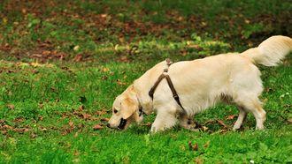 Opgepast: Slakken eten kan hond om deze reden fataal worden