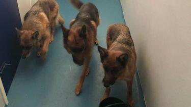 Politie Renesse redt vier honden uit hete aanhanger