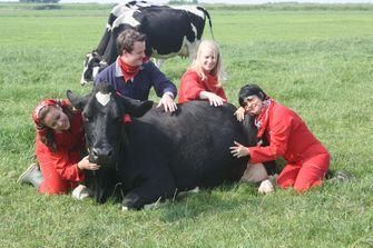 Van de trage hartslag van een koe word je ontspannen. Foto: Boerderijrecreatie