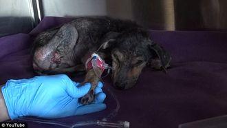 Bijzondere make-over voor mishandelde hond