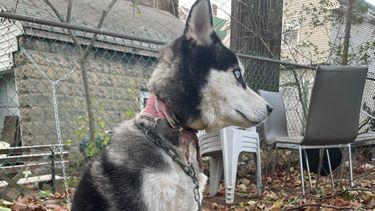 Hond Carter werd achtergelaten in de tuin